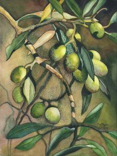 """Olive Branch,"" by Kathy Aram"