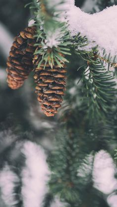 Phone Wallpaper - Winter Edition - Christmas mobile backgrounds-Phone Wallpaper – Winter Edition – weihnachtliche Handy Hintergründe Looking for New Phone Wallpaper – Winter … - Wallpaper Natal, Wallpaper Fofos, Xmas Wallpaper, Handy Wallpaper, Snow Wallpaper Iphone, New Year Wallpaper, Mobile Wallpaper, Wallpaper Winter, Christmas Phone Wallpaper