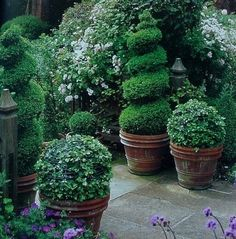 Topiaries in rustic planters.  Elegant!