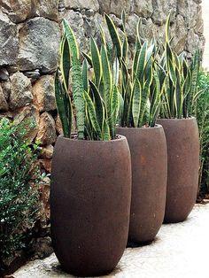 Neste ambiente, a planta foi eleita para contrastar com a parede de pedra cacão, que é um tipo de basalto. Projeto do paisagista Marcelo Belloto Garden Troughs, Garden Planters, Outdoor Planters, Outdoor Gardens, Tall Planters, Modern Gardens, Small Gardens, Container Plants, Container Gardening