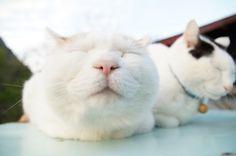 Shiro and Chibi-Side!  <3