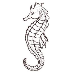 1000 images about seahorses to draw on pinterest for How to draw a simple seahorse