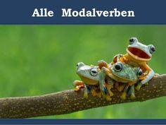 Modalverben im Präsens - Bedeutung und Anwendung A1