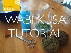 Wabi-Kusa DIY Tutorial
