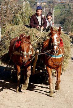 Horse and cart, Maramures, Romania.  Photo: iancowe, via Flickr