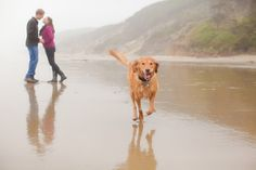 engagement photos with dog beach - Google Search
