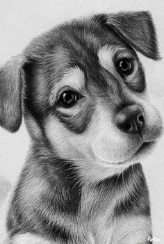 realistic pencil animals drawings animal drawing dog puppy dogs healthportal4u info