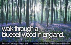 walk through a bluebell wood in england. requested by carol.