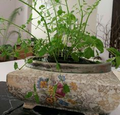 """Edible Home Kitchen Design - Using an old antique soup bowl as a """"cache pot"""" for your fresh herb pots. makes an elegant kitchen accessory"""
