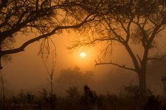 African bush in the mist