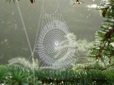 a real craftsman, that spider...