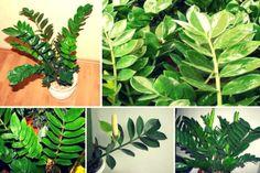 Grădinărit Archives - Page 2 of 19 - Fasingur Plant Leaves, Tarts, Van, Green, Plant, Mince Pies, Pies, Tart, Vans