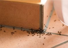 How to get rid of ants in the house? Home remedies for ants. How to remove ants from the house fast and naturally? Ways to kill ants. Stop ants infestation. Home Remedies For Ants, Natural Remedies For Ants, Ants In House, Black Ants, Get Rid Of Ants, Fruit Flies, Natural Solutions, Home Hacks, Pest Control