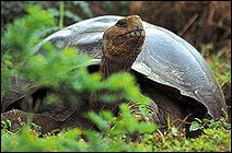 The Galapagos Islands are considered one of the most spectacular and pristine National Parks in the world. Visitors delight in the abundant, unusual, and surprisingly approachable wildlife--from Galapagos giant tortoises to playful sea lions to the fascinating blue-footed boobies