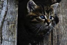 Katze, Kätzchen, Rozkošné, Wenig, Holz