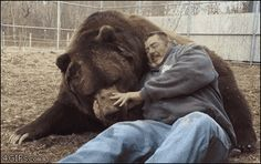 1,400 pound Kodiak bears need hugs too.   All I can say is, he looks like he smells terrible. Which one, you might ask? Yep!
