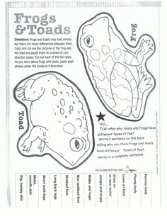 samuelsonwiki ss and science - 28 images - 17 best images about frogs on descriptive, 1000 ideas about frog and toad on writing, samuelsonwiki ss and science, frog cycle unit cycles frogs and kindergarten, 33 best frog unit images on frogs school and 1st Grade Science, Kindergarten Science, Elementary Science, Preschool Learning, Montessori Science, Frog Activities, Lifecycle Of A Frog, Frog Life, Frog Theme