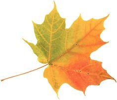 Google Image Result for http://www.tiffanikim.com/wp-content/uploads/2009/04/autumn-leaf.jpg