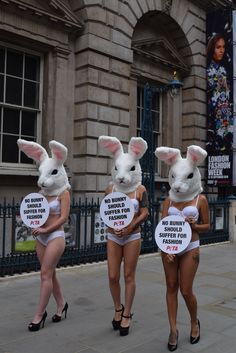No bunny suffer fashion and cosmetics -