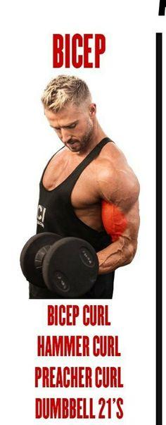 Preacher Curls, Hammer Curls, Biceps, Gym, Excercise, Gymnastics Room, Gym Room