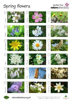 Flowers - Flower Hunt Sheet May Flowers, Types Of Flowers, Types Of Plants, Spring Flowers, Outdoor Education, Outdoor Learning, Wood Anemone, Chestnut Horse, Flower Names