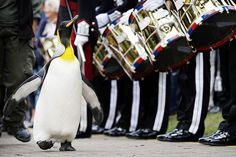Did you know Norway knighted a penguin? Check out the source for dozens more of animal facts guaranteed to make you smile!