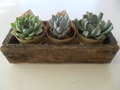 Succulent Centerpiece, Great For Rustic Weddings, Cocktail Parties And Other Special Events, Housewarming Gift. $24.95, via Etsy.