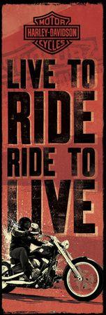 Harley Davidson Lebe um zu reiten Motorcycle events and rides Harley Davidson Posters, Harley Davidson Chopper, Harley Davidson Motorcycles, Biker Quotes, Motorcycle Quotes, Motorcycle Art, Motorcycle Garage, Triumph Motorcycles, Indian Motorcycles