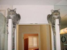 the pillars of the house ... ❤