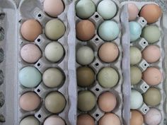 Eggs   Ways to Make Money While Homesteading