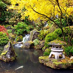 Portland Japanese Garden, Portland, OR. Japanese maples are at their most vivid in autumn at the Portland Japanese Garden.