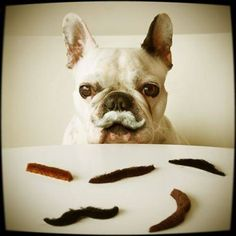 Pick your moustache! www.keepfred.gr