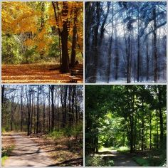 """The weather in Michigan is kind of a joke, as we really only have two seasons: winter and summer, but at least we get to watch the leaves change in the """"fall"""" and the flowers pop back up again during our weeklong """"spring""""."""