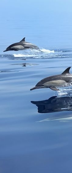 Dreaming of dolphins • photo: ScottS101 on Flickr