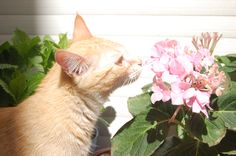 Mis Gatas... i miei gatti... my cats