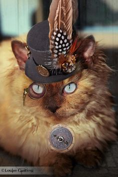 Steampunk Cats by Louise Cantwell Chat Steampunk, Steampunk Kunst, Steampunk Couture, Steampunk Design, Steampunk Fashion, Pretty Cats, Beautiful Cats, Cute Cats, Crazy Cat Lady