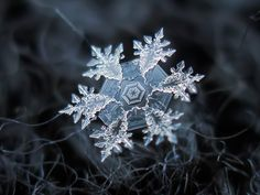 https://flic.kr/p/iqe2uG | Snowflake macro: darkside (print version) | Snowflake shot, reprocessed for printing: enlarged 2x using SmartEdge demo (free resampling program) and texturized with these nice freeware canvas textures.  Prints: Artist website | RedBubble.com  All snowflake photos available in blog. And here is article about my snowflake macro photography.  Interested in commercial use? Please mail me: chaoticmind75@gmail.com