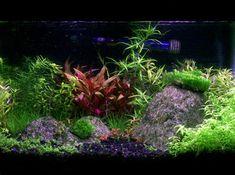 29 Gallon Fish Tanks (page 18) | RateMyFishTank.com