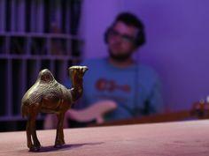 A Camel for good Vibes during Recordings at NSB Rec. Studios Zug Good Vibes, Giraffe, Camel, Studios, Animals, Train, Felt Giraffe, Animales, Animaux
