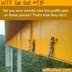 WTF Facts : funny, interesting & weird facts<<< Oh my god NO<< <LOL I read giraffes. Wtf Fun Facts, True Facts, Funny Facts, Random Facts, Random Stuff, Creepy Facts, The More You Know, Just For You, Gi Joe