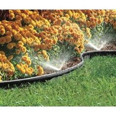 Brilliant idea - garden edging thats also a sprinkler system   At Amazon - $20 for 20 ft. I must have!!!