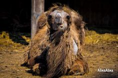 Icon Photography, Horses, Animals, Animais, Animales, Animaux, Animal, Horse, Dieren