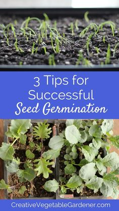 Avoid the frustration of seeds not germinating with these essential tips.