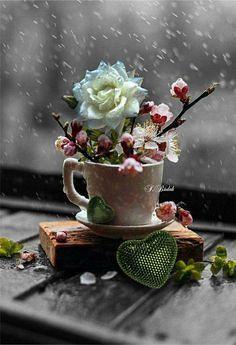 Cup as a vase.Love the moss. Good centerpiece for a tea party. Color Splash, Color Pop, Colour, Rain Window, Beautiful Flowers, Beautiful Pictures, Coastal Decor, Belle Photo, Flower Power