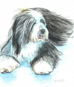BEARDED COLLIE Beardie Original Watercolor on Ink Print Matted 11x14 Ready to Frame by writedesign on Etsy https://www.etsy.com/listing/186065528/bearded-collie-beardie-original