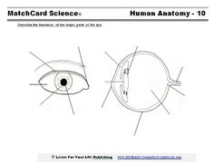 Worksheets Structure Of Human Eye Worksheet parts of an eye colors and eyes the human anatomy unit study is for 3rd to 8th grade it based on