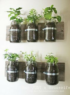 Herb Garden attached to wall - Won't take up any counter space in your kitchen. I'd paint the wood to make it a little prettier, label each jar, and have a little pocket or sleeve attached for holding the shears for cutting the fresh herbs while cooking. :)