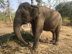 Elephant in Madikery