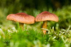 Mushrooms by alenaterbach86. @go4fotos
