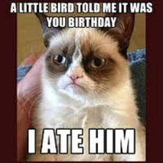 Grumpy Cat Happy Birthday Bird. Not Chemistry but I like it